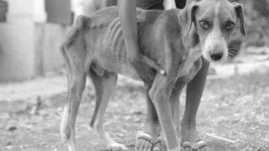 Photo of Nuevas medidas de la justicia contra los «actos de crueldad animal»