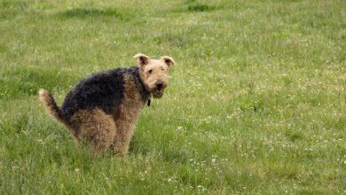 Photo of ¿Cómo evitar que los perros defequen en el jardín?