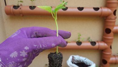 Photo of Huertas: cinco consejos clave para producir plantines
