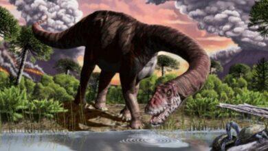Photo of Descubrieron en Chubut una especie de dinosaurio