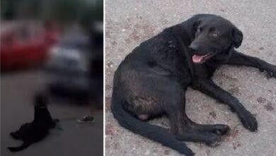 Photo of Imputaron a una mujer que ató a su perro al auto y lo arrastró por la calle – VIDEO