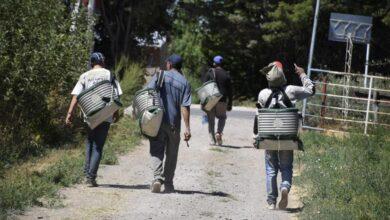 Photo of Productores frutícolas piden eliminar el protocolo migrante